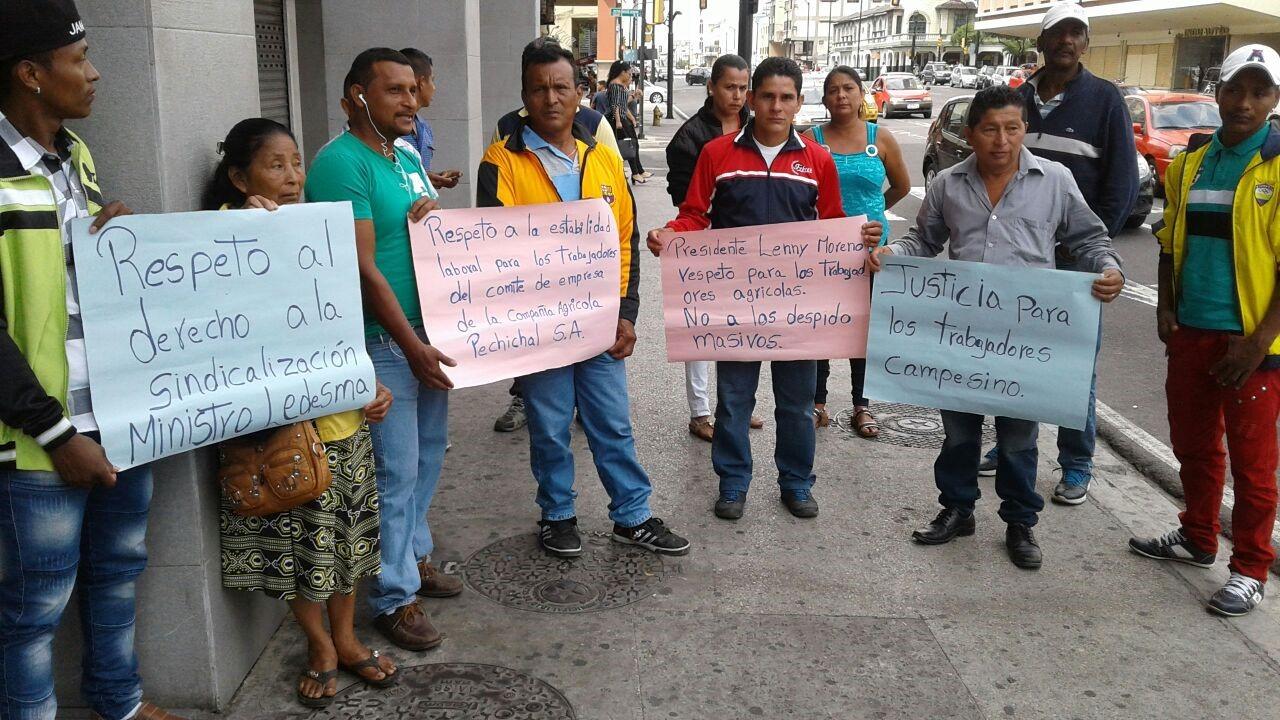 Hacienda Pechichal despide trabajadores por organizarse en sindicato en Ecuador.